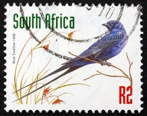 Postage stamp South Africa 1998 Blue Swallow, Bird